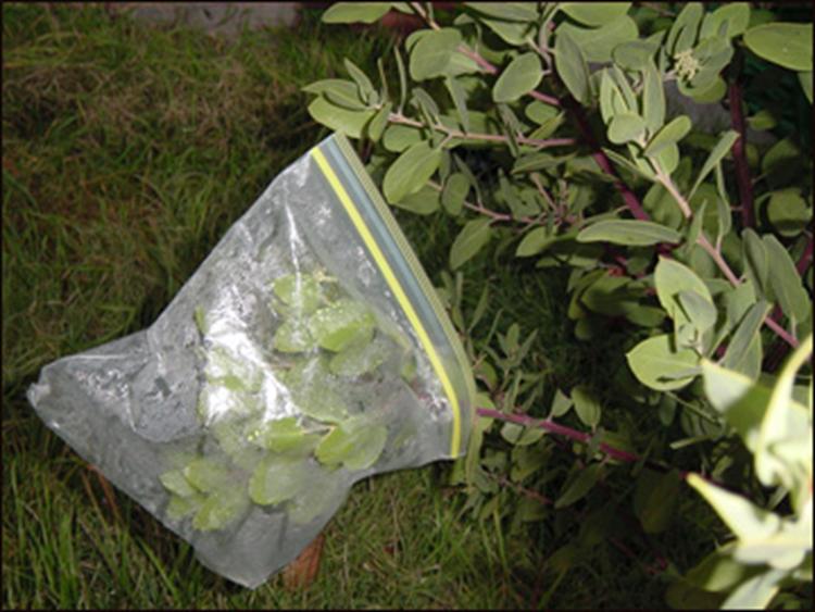 Transpiration Bag