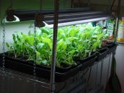 Indoor-Vegetable-Garden-Ideas