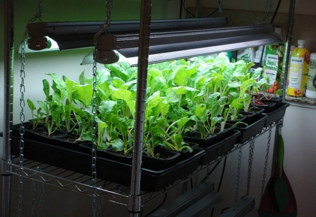 The Ultimate Indoor Vegetable Gardening Guide SURVIVALIST.COM SELFRELIANCE PREPAREDNESS