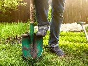 Vegetable-Garden-for-Beginners