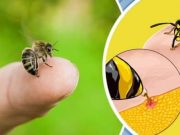 Bee Sting Survival Hack