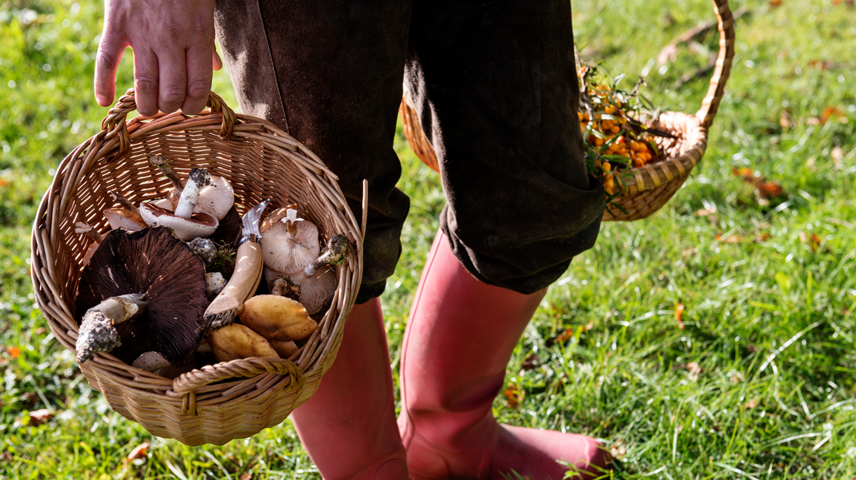 6 Places Where You Can Forage For Your Food