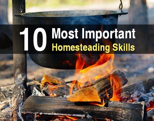 10 HS Skills