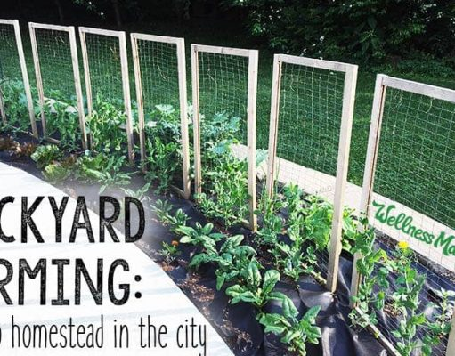 Backyard-Farming-How-to-Homestead-in-the-City