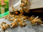 Mason Jar Beekeeping