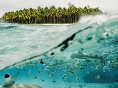 SwimSharks