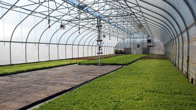 greenhouser
