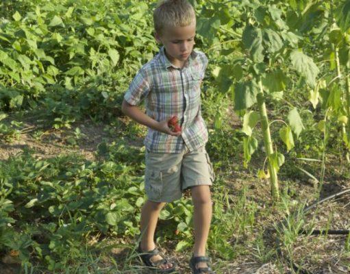 Kids on homestead